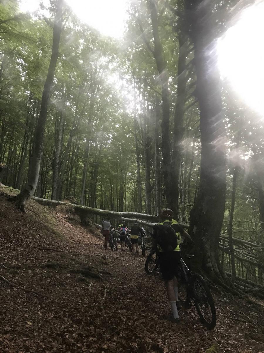 i-boschi-incantati-nella-valle-del-Chiarino